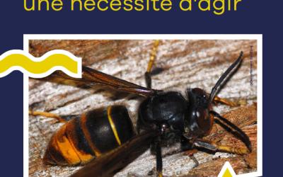 Reconduction de l'aide pour la destruction des nids de frelons asiatiques en 2021